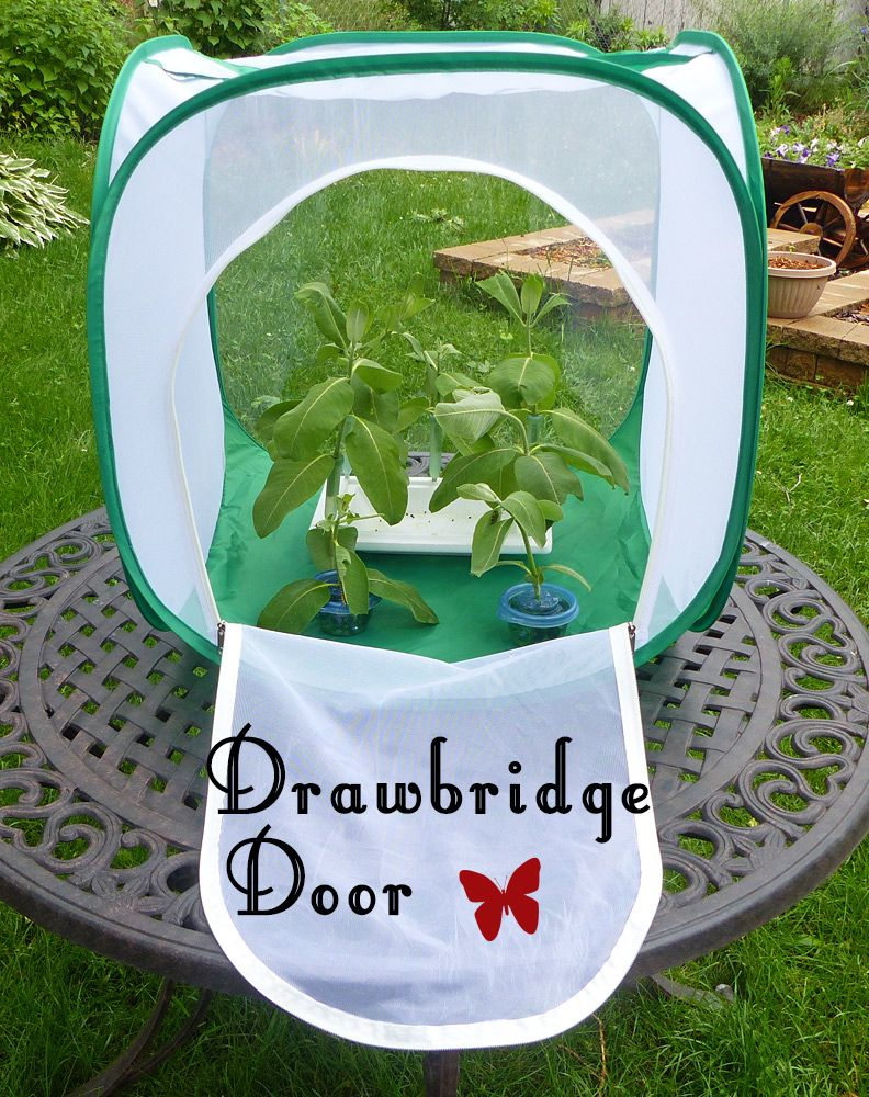 Cube Erfly Cage With Drawbridge Door Design For Easy Access Raise More Monarchs Less Effort