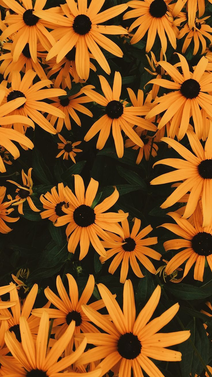 Yellow Daisies Dni Pinterest Yellow Daisies Wallpaper And Flowers