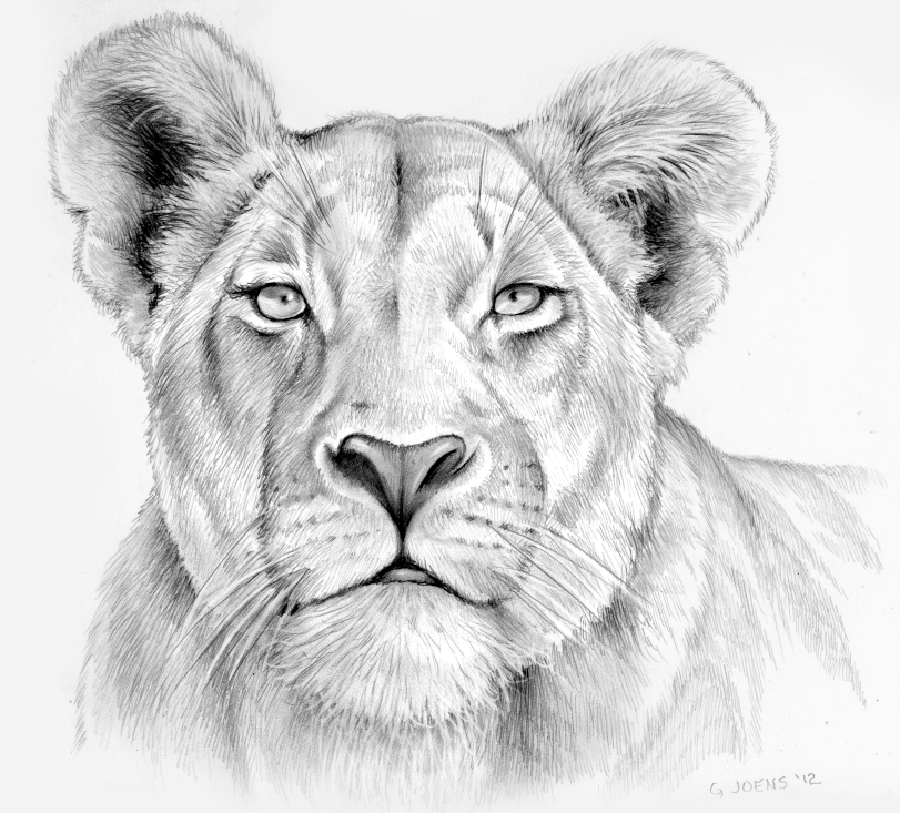 Lioness in pencil by gregchapin.deviantart.com on ... Queen Lioness Drawing
