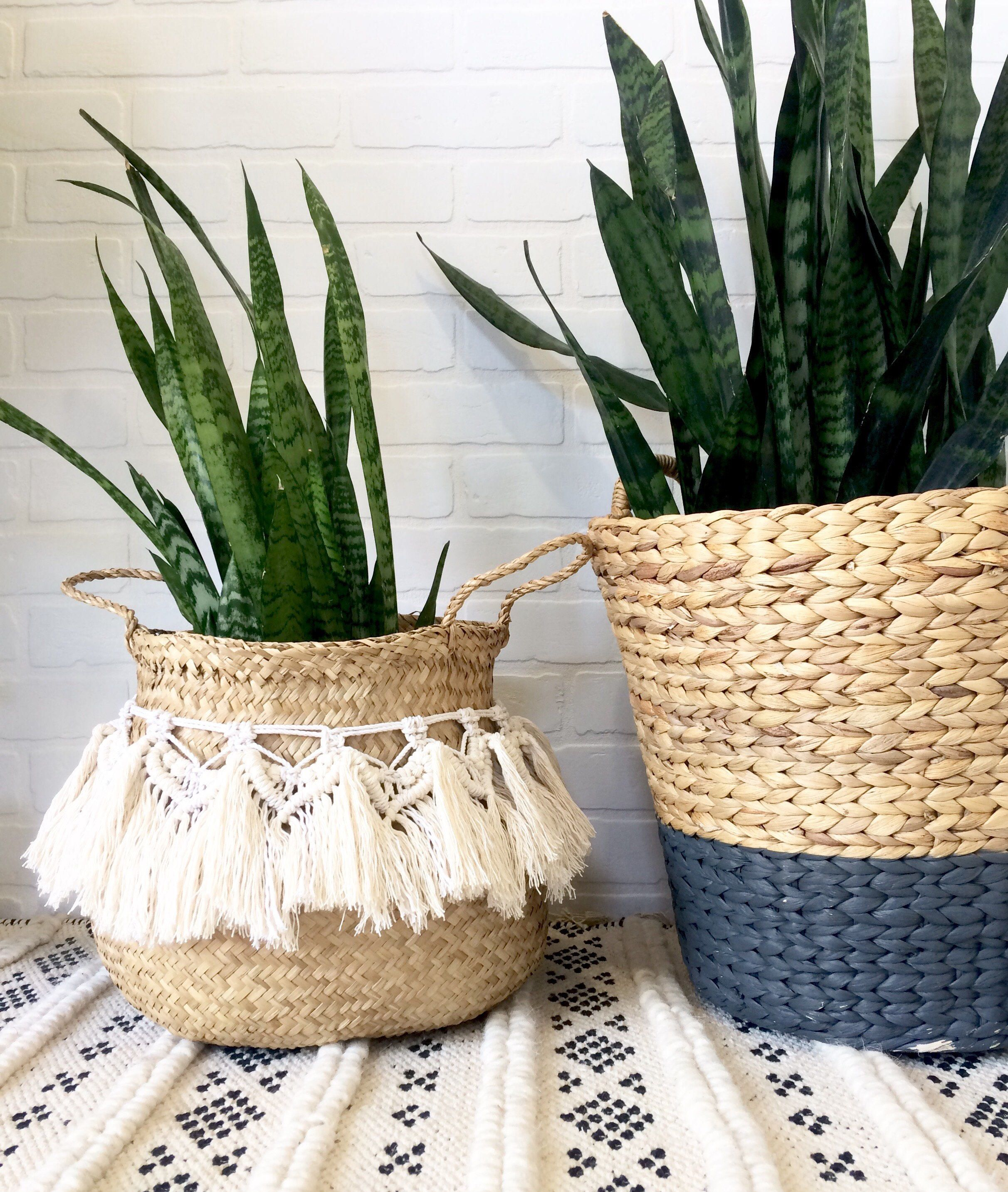 Cool Plants For Your Room Green Thumb Seagrass Fringe Basket Macrame Plant