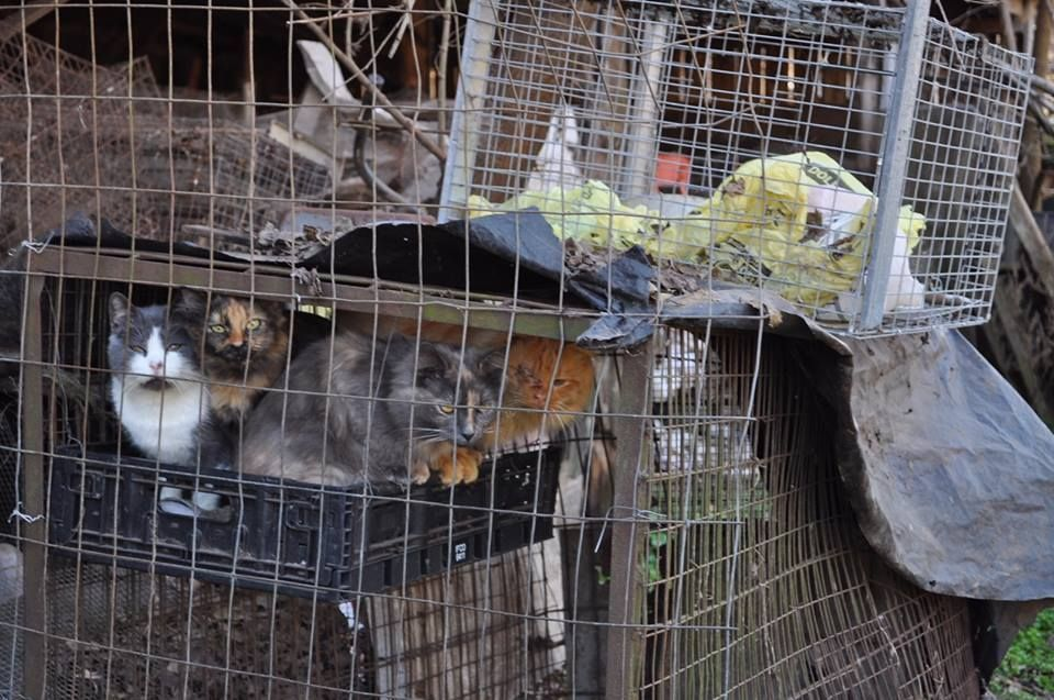 Hundreds Of Neglected Animals Rescued From Va Farm Wtop No Kill Animal Shelter Animal Rescue Pet News