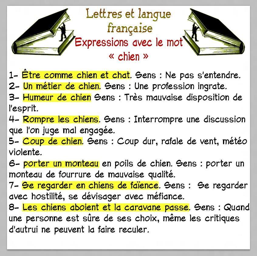 15 wyrażeń ze słowem PIES - wyrażenia 4 - Francuski przy kawie