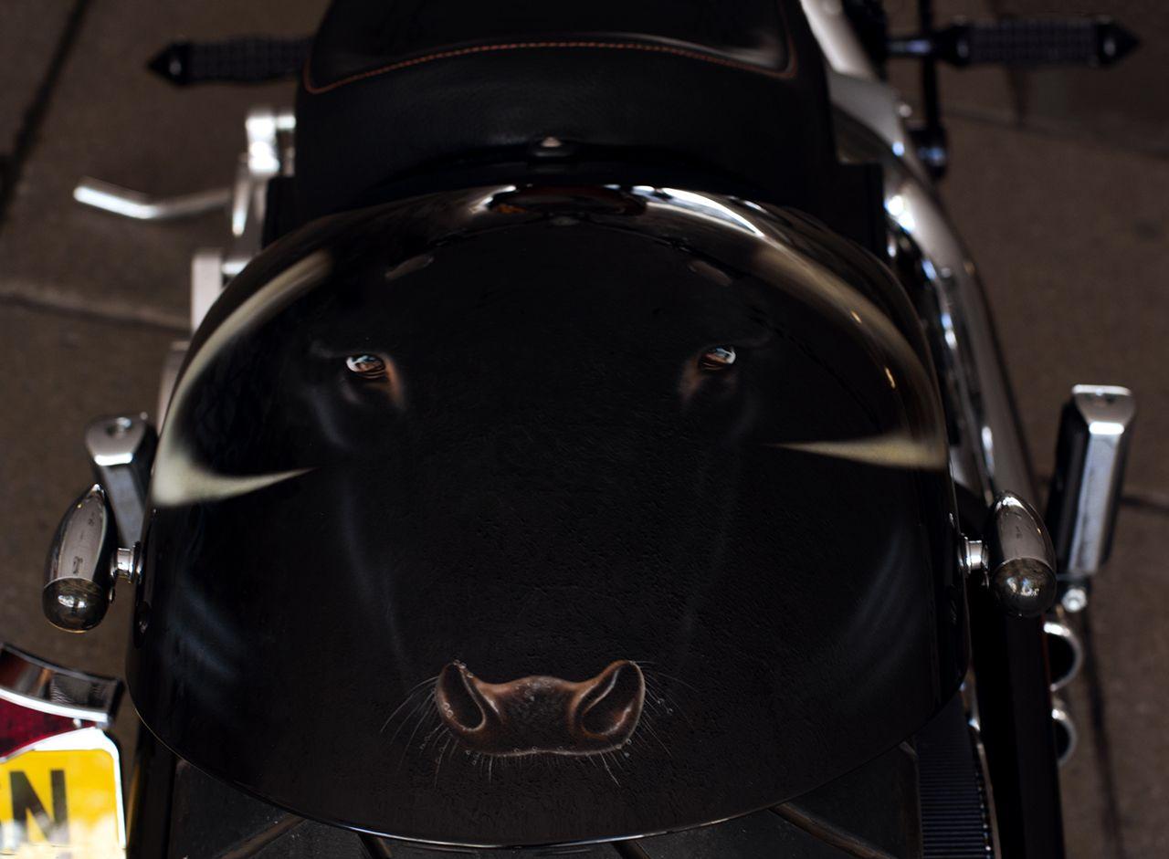 raging bull harley davidson, paintedme in 2012   airdevils