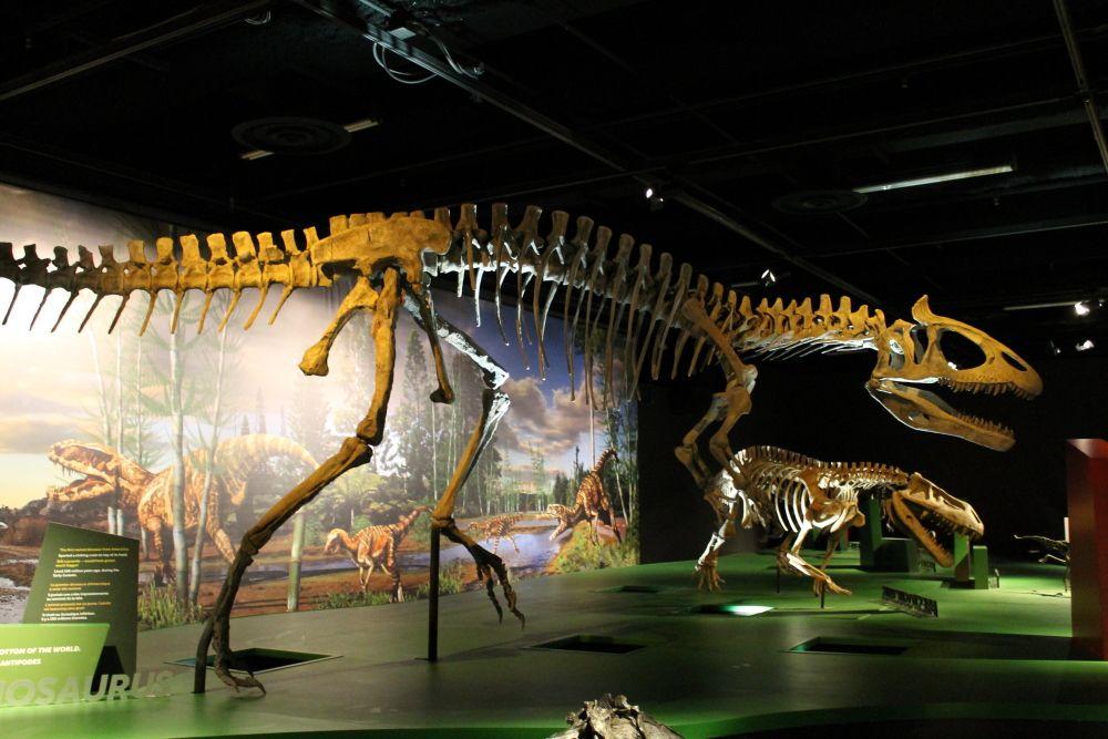 Réplique du squelette de Cryolophosaurus