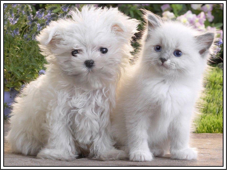 set dog maltese puppy white kitten cat stationery greeting