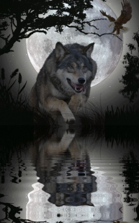 Waters Edge Painting Wolf Pictures Wolf Dog Wolf Love