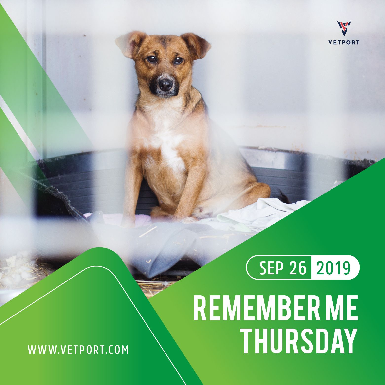 Remember Me Thursday Animal Lover Veterinary Pet Care