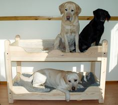Double Dog Beds For Large Dogs