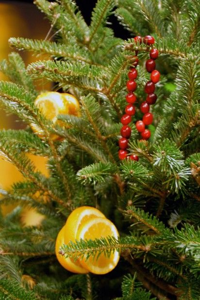 Decorate Christmas Trees to Feed Wildlife christmas Pinterest