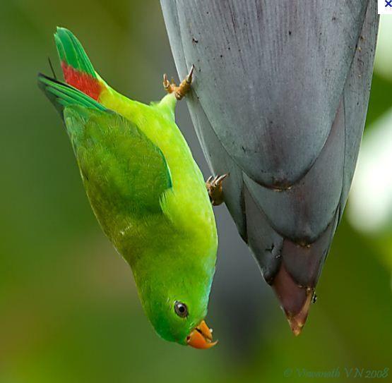 Parrot Pretty Birds Beautiful Birds