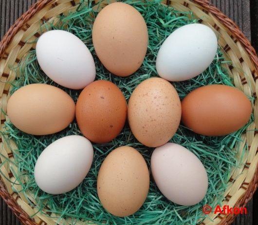 Das Huhn legt Eier