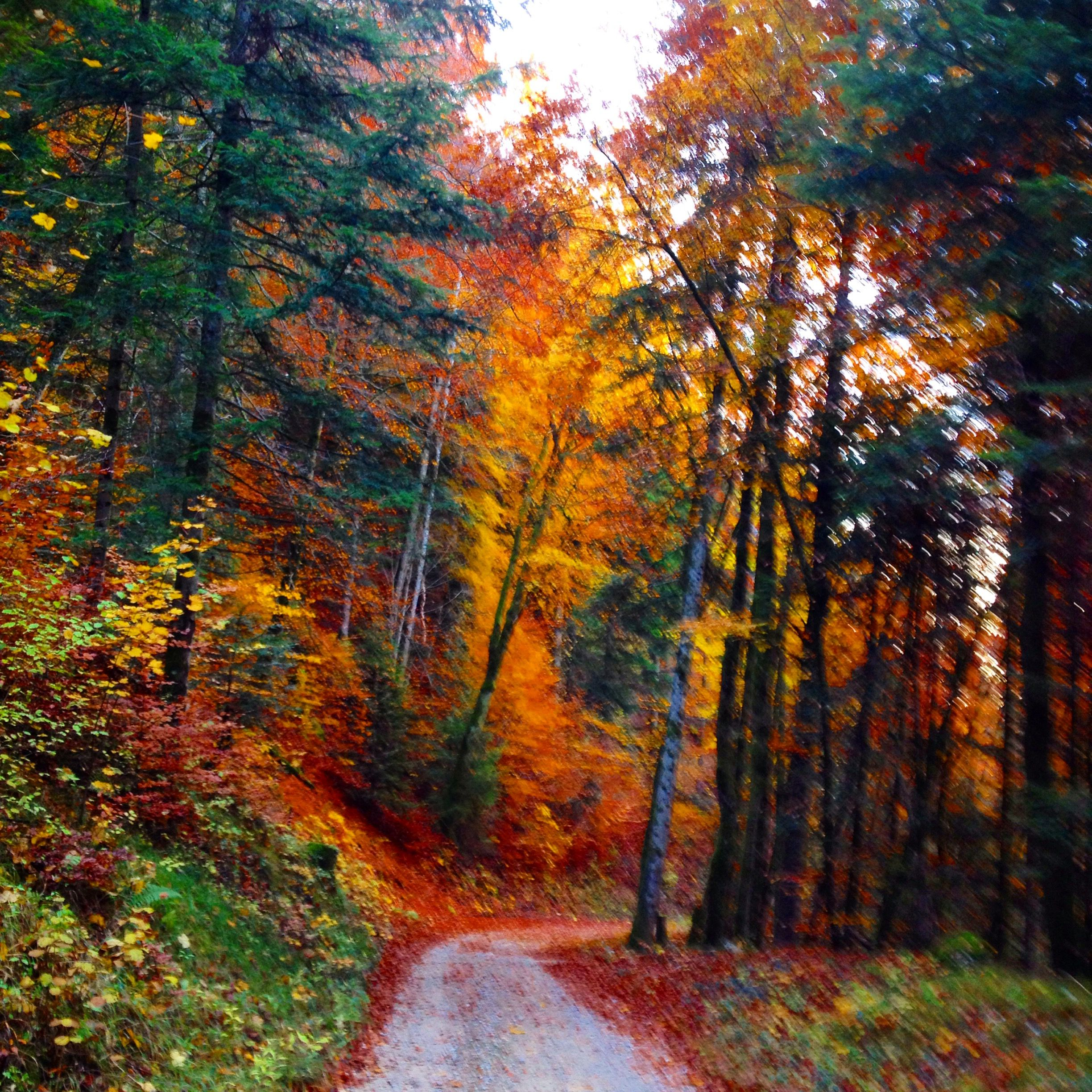 Automne Jura France Chemin Foret Franchecomte Couleurs Rouge Or Mystere Flou Idee Voyage Paysage Foret