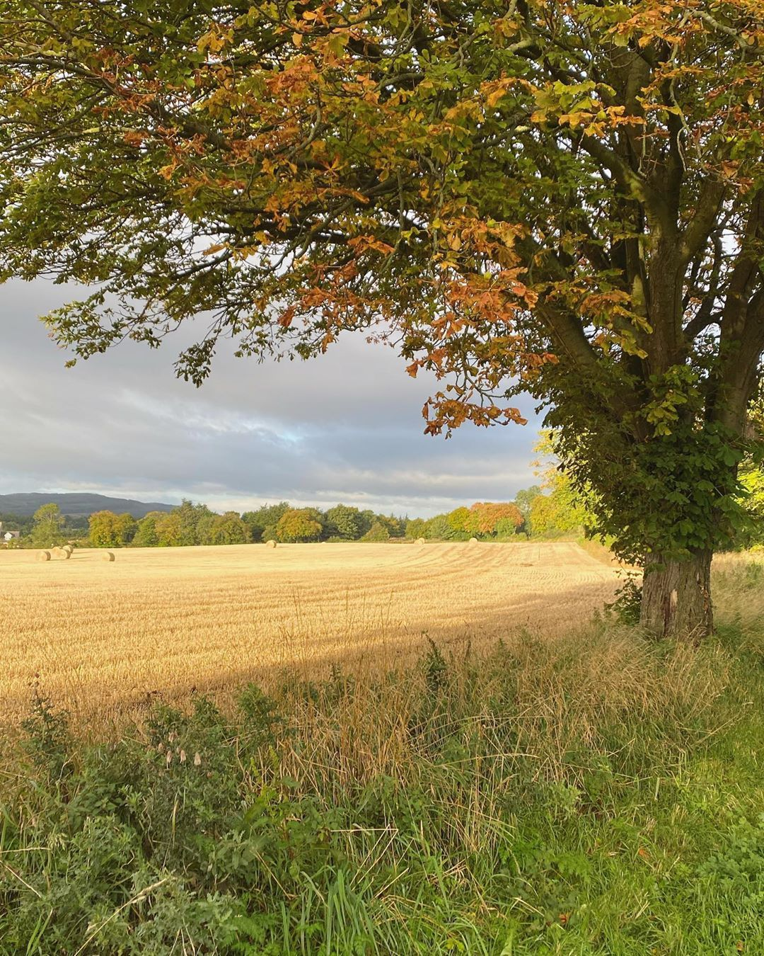 "Rebecca on Instagram: ""Autumn has arrived in Scotland. #autumn #quietshadesofbrown #kinross #aseasonalshift #perthshire #countryliving #countrylife #scotland…"""