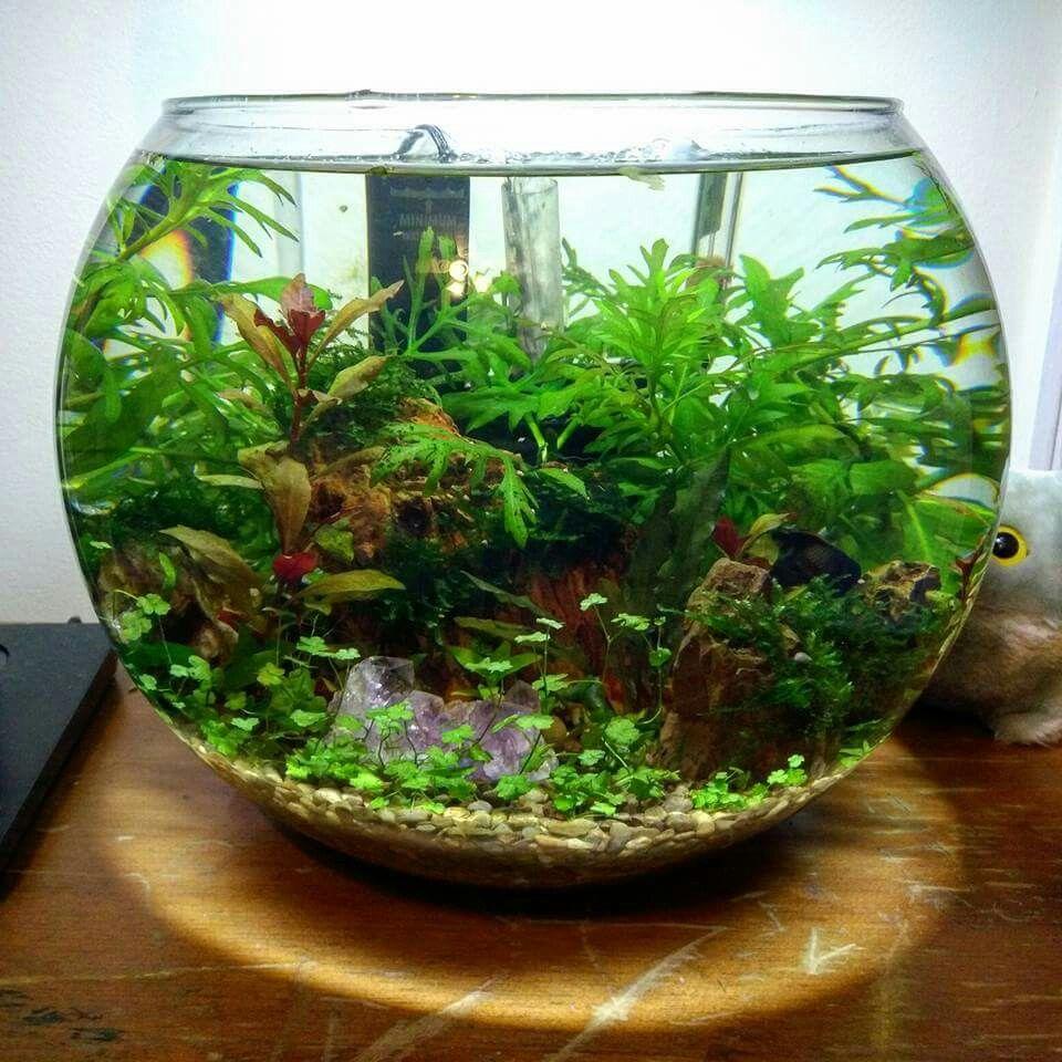 Pin od phazon cooperlewis na aquariums pinterest akwarium