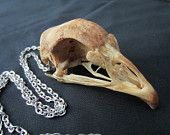 Skunk Bone Necklace Real Bone Gothic by BlackWolfTradingPost