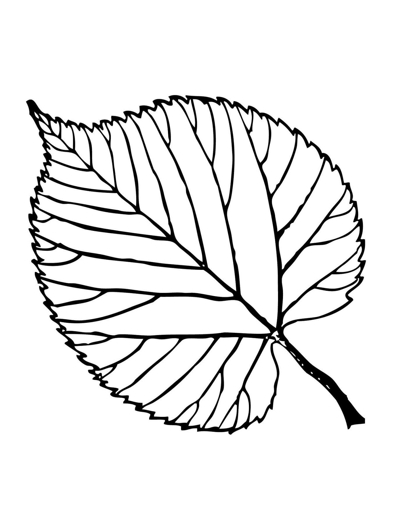 Leaf Coloring Pages Printable | Activity Shelter | Coloring Pages ...