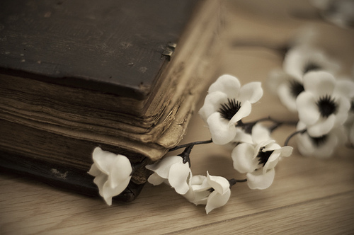 Teus olhos são meus livros,flores me são teus lábios. love