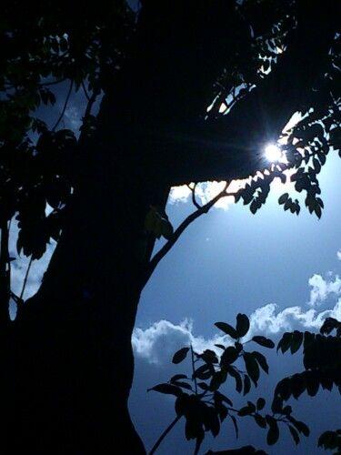 Um toque da natureza  em meu olhar.. Pra vocês! @AllRightsofGod www.hersander.com