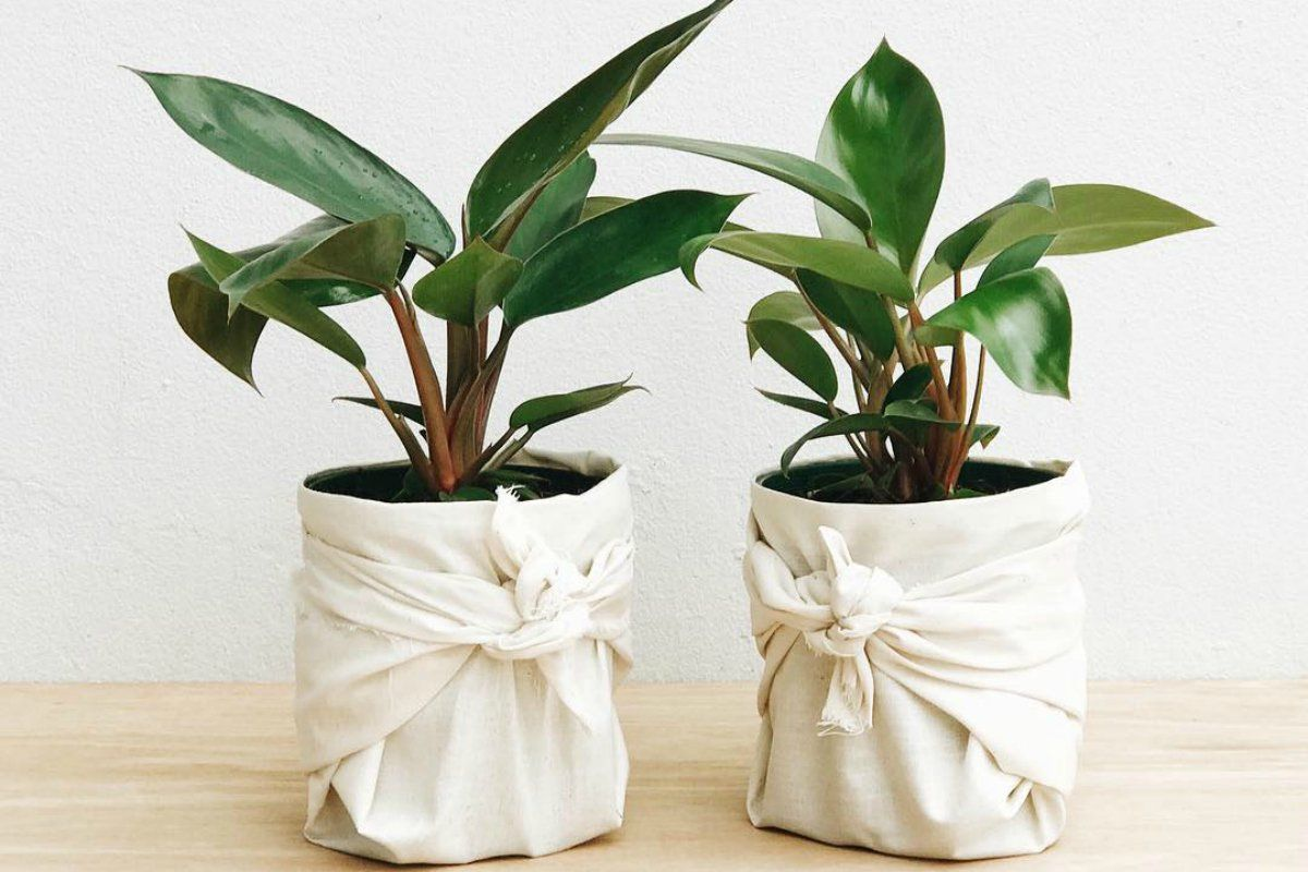 Ask a plant expert whats the one indoor plant even a