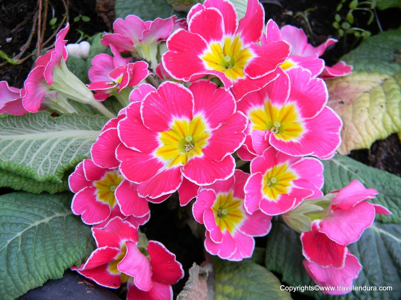 Flowers For > Names Of Pink Flowers (With images