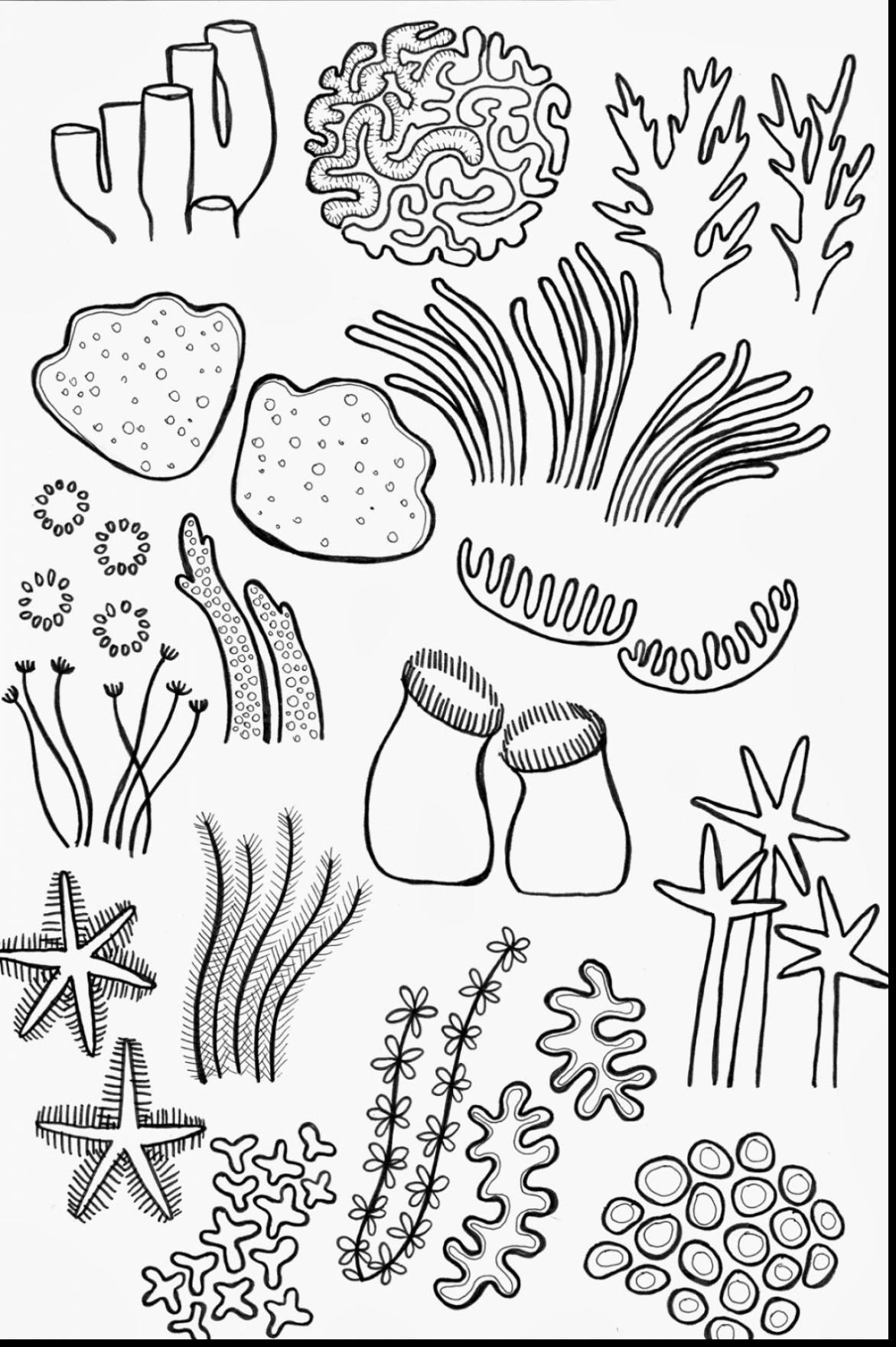 Drawn Coral Reef Coloring Page 2 Coral Reef Art Coral Drawing