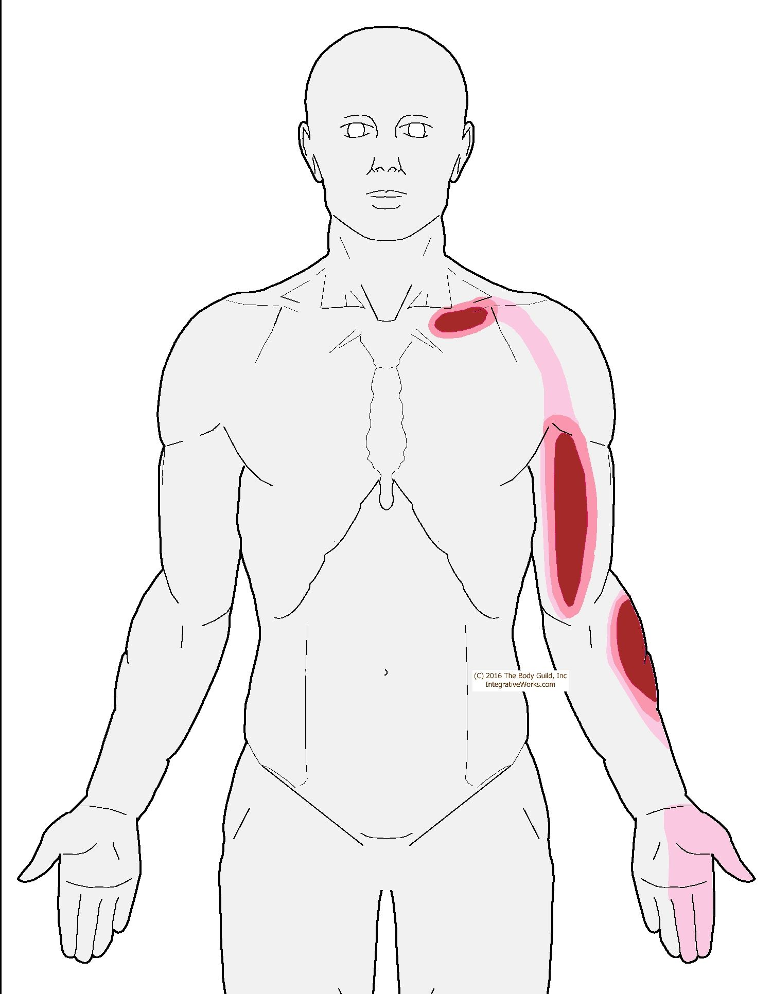 Trigger Points.... | exercises | Pinterest