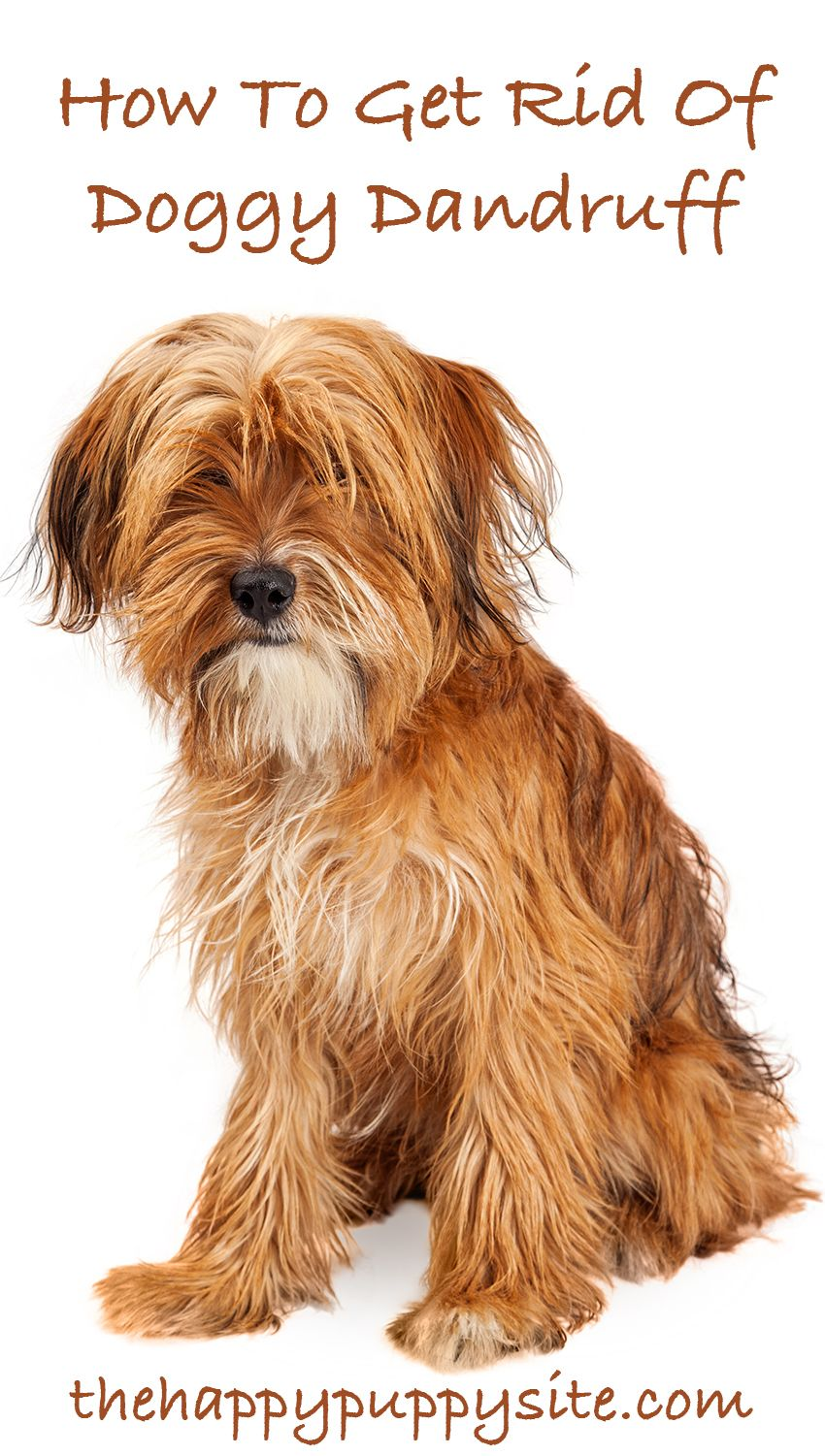 How To Get Rid Of Dog Dandruff A Guide To Causes And Treatments Dog Dandruff Puppy Dandruff Dog Dry Skin