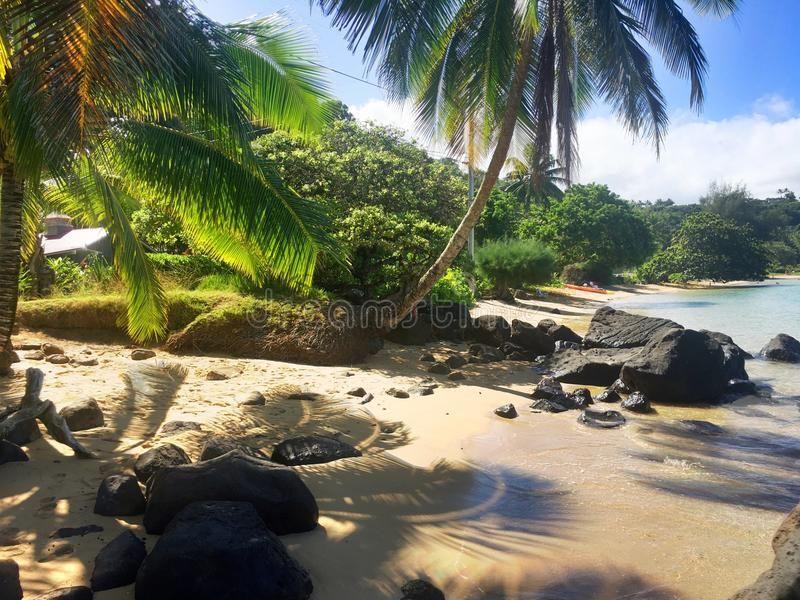 Anini beach on the island of kauai hawaii tropical palm