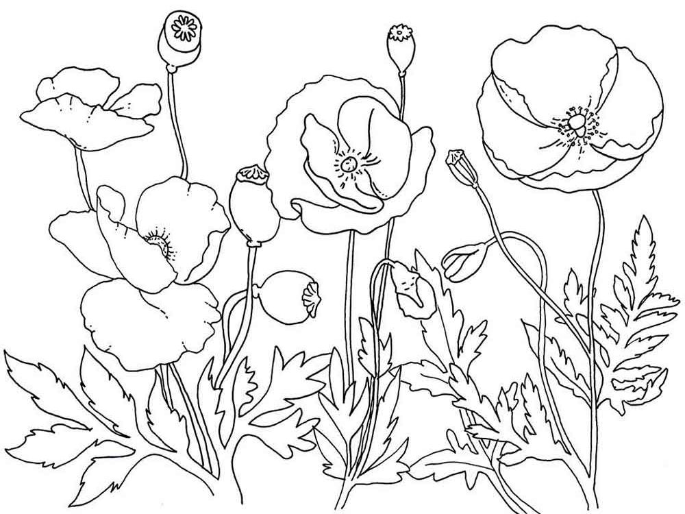 Pin On Flower Coloring Pages
