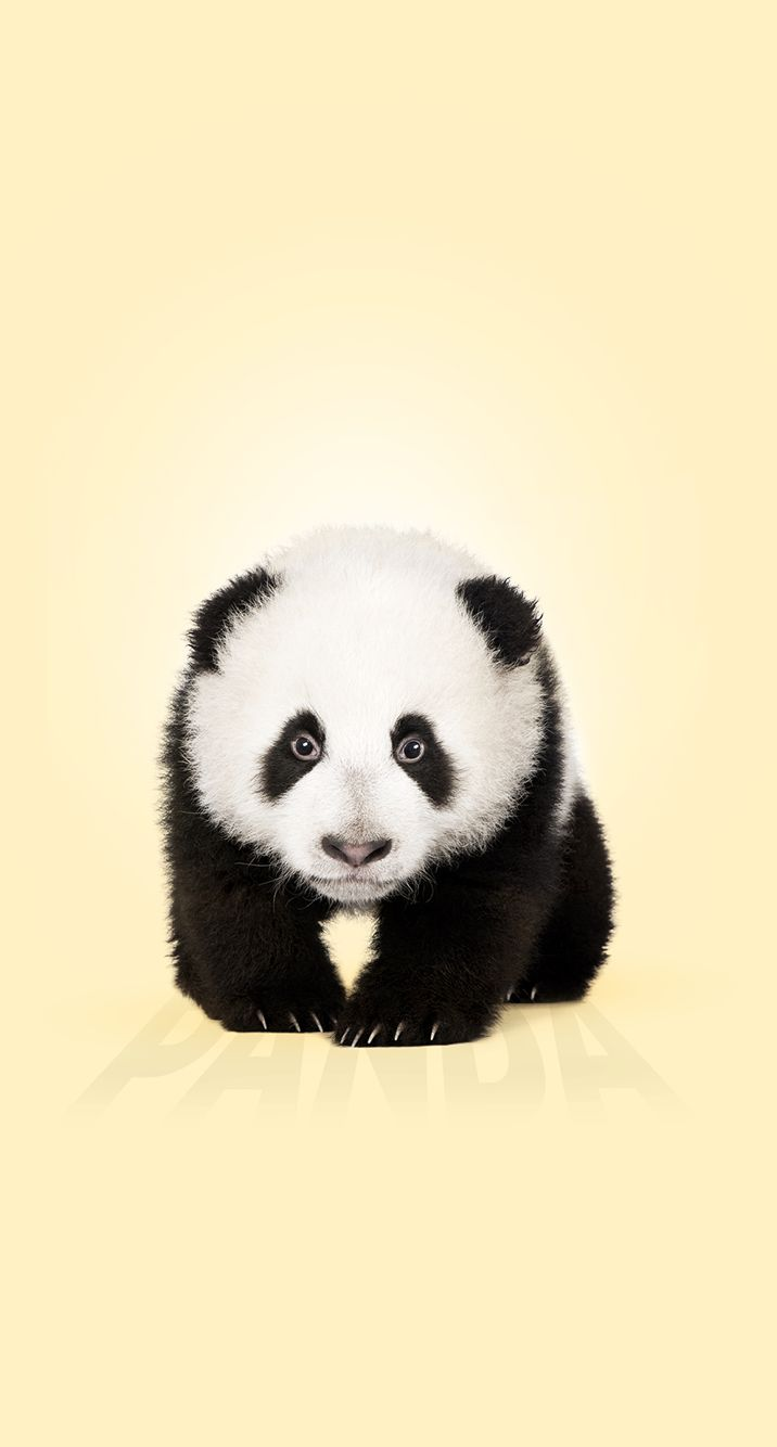 Panda iPhone 6 | iPhone 6 | Pinterest | Panda