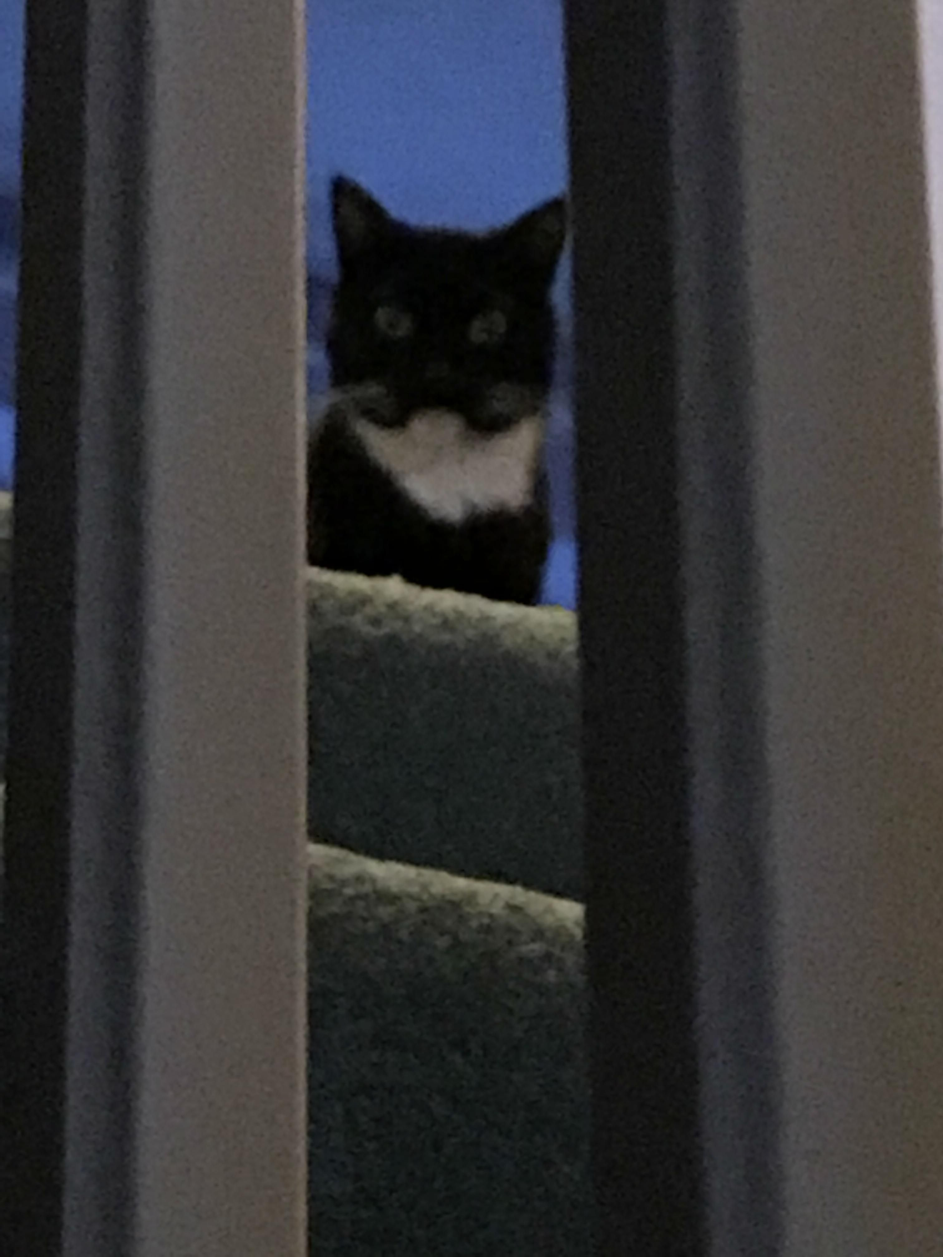 My Cat Isnt Allowed Upstairs Alone After A Pee Incident Every Now And Then She Shoots Up There And Will Look Down On Me Stubbornly Kittens Cutest Cats Acting