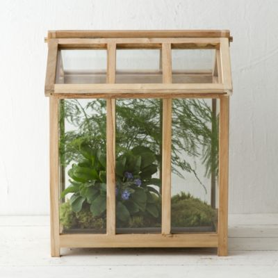 Teak House Terrarium in New New Arrivals Garden at Terrain