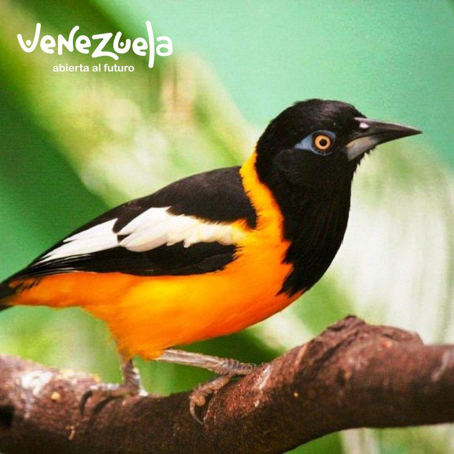 Ministerio De Turismo Y Comercio Exterior On Twitter Pretty Birds Animals Venezuela