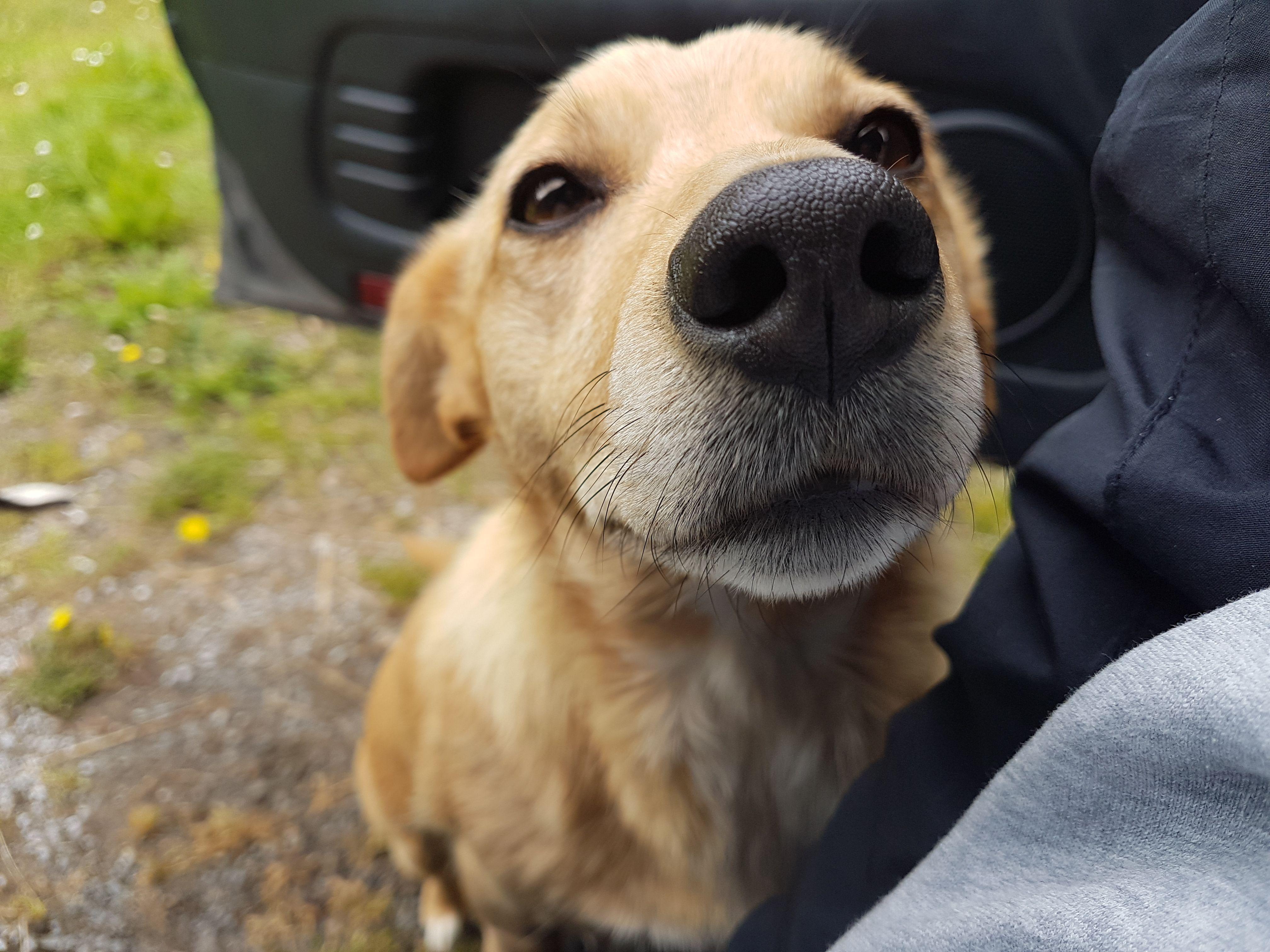 My mates dog momo always says hi ifttfbeta cute uc