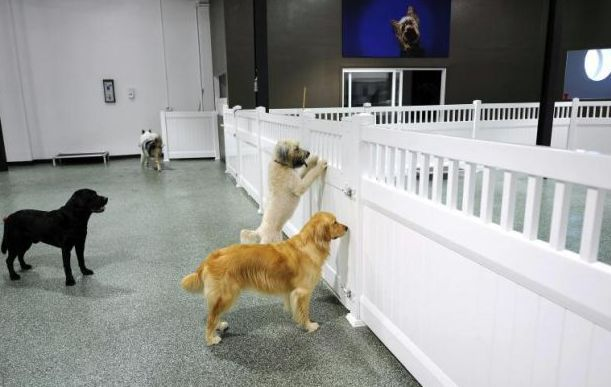 D Pet Hotels A Luxury Resort Spa For The Distinguished Dog Pet Hotel Pet Resort Luxury Dog Kennels