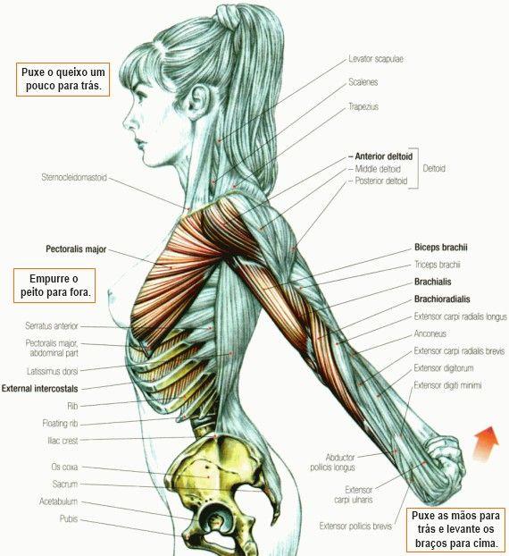 Alongamento deltoide anterior | E X E R C Í C I O S | Pinterest ...