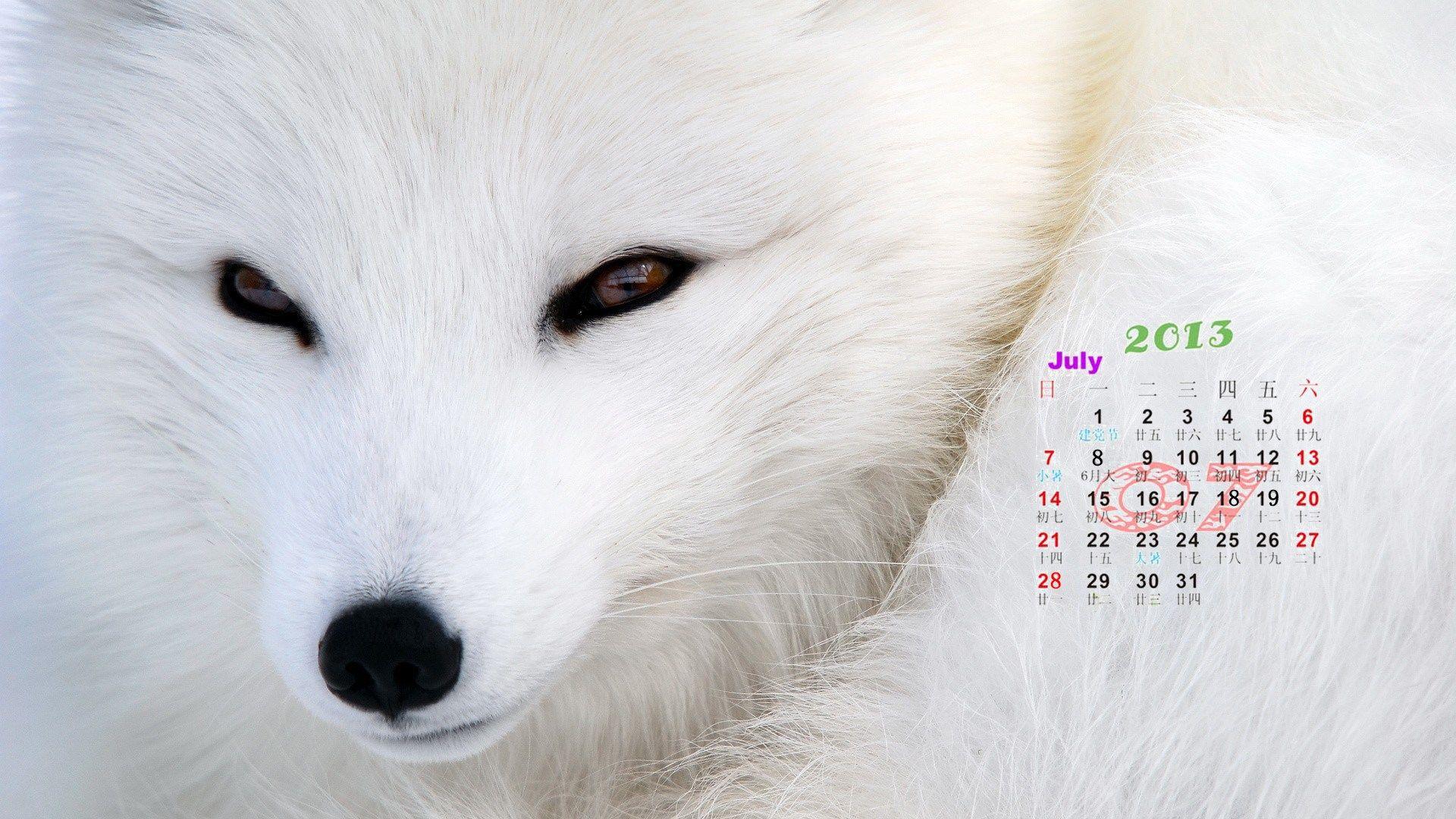 2013年7月桌面日历精选壁纸 精选 优质 日历 Clever animals, Arctic