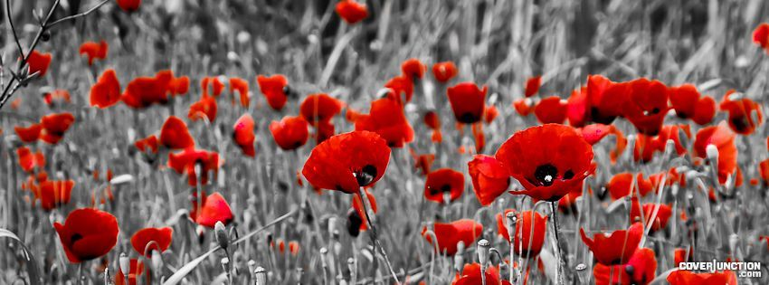 facebook covers poppies - Google Search