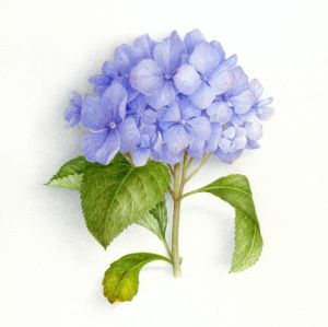 Hortensia Vincent Jeannerot En 2019 Hortensia Bleu Peinture