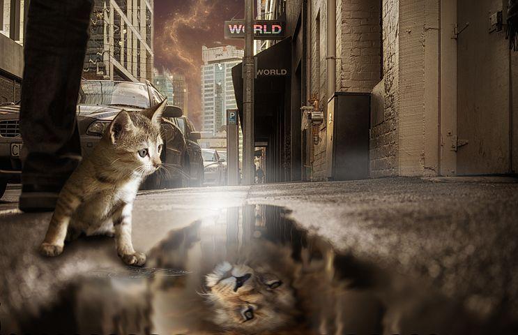 Lion Cat Mirror Image Fantasy Photomontage Mirror Image Photomontage Image Cat