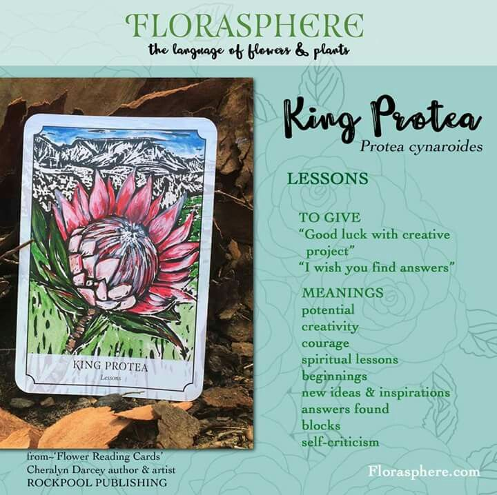King Protea Protea Flower King Protea Flower Meanings