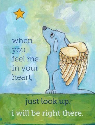 I Think Of All My Babies That Went Over The Rainbow Bridge This