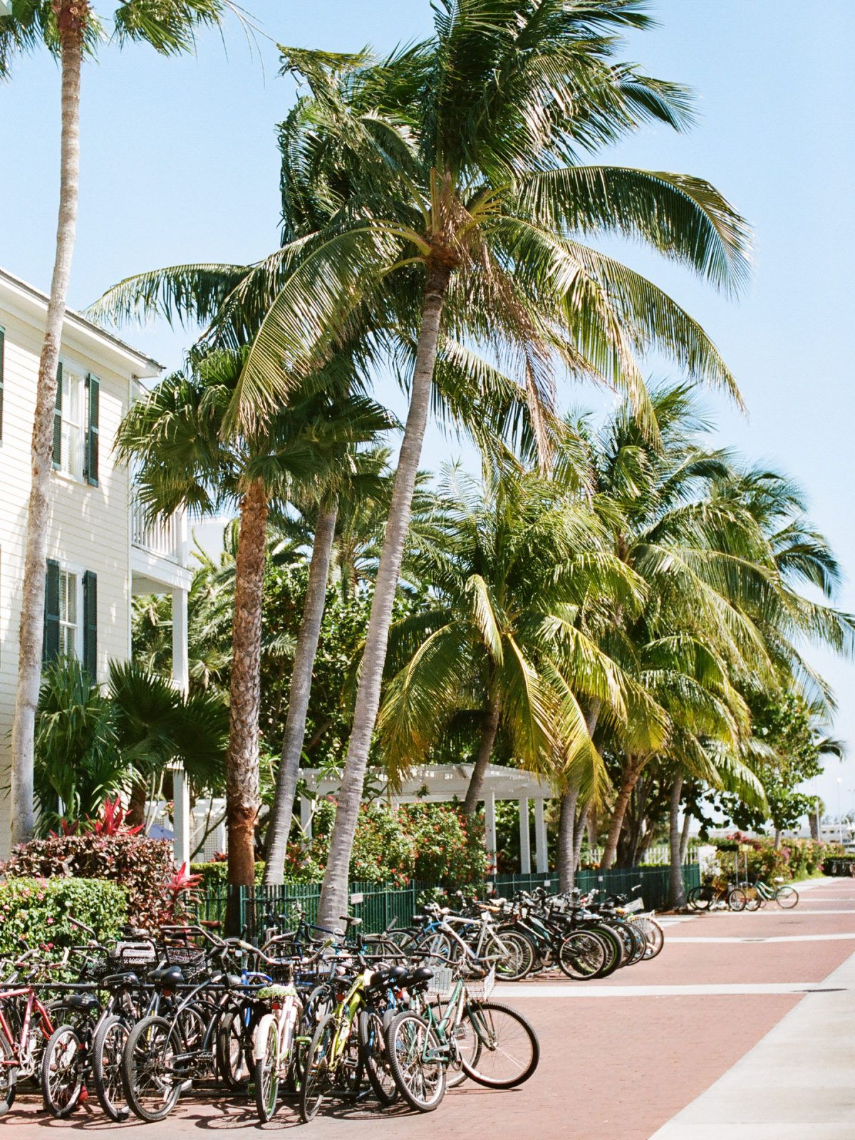 Key west wedding at the ernest hemingway home museum