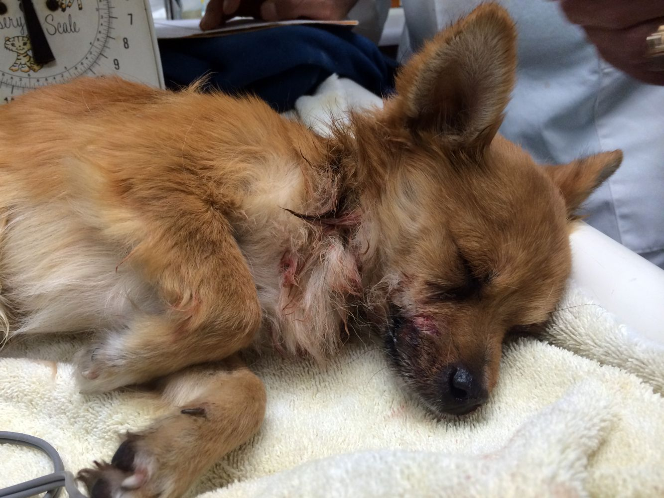 16++ Miller road animal clinic images