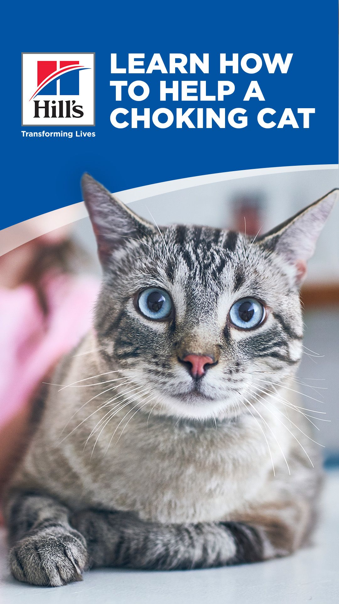 What To Do If Your Cat Is Choking Hill S Pet In 2020 Cats Pet Emergency Heimlich Maneuver