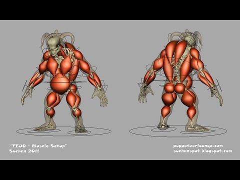 Maya Muscle Tutorial How to apply Muscles in Maya Rigging