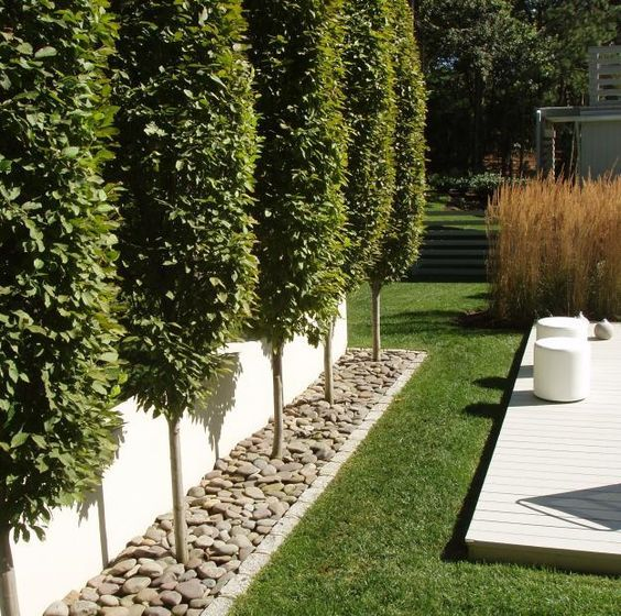 Hornbeam trees for fence line sequin gardens pinteres for Small backyard privacy ideas