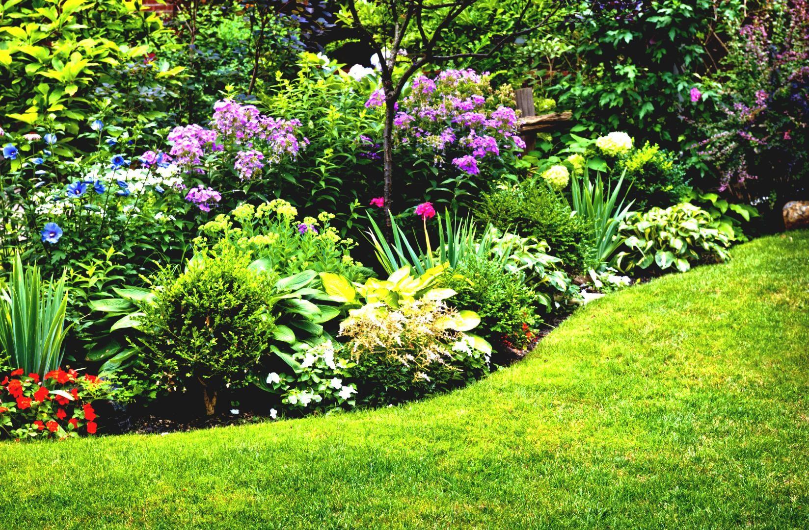 Land Scape Low Growing Perennial Flowers Pin Garden Garden Design