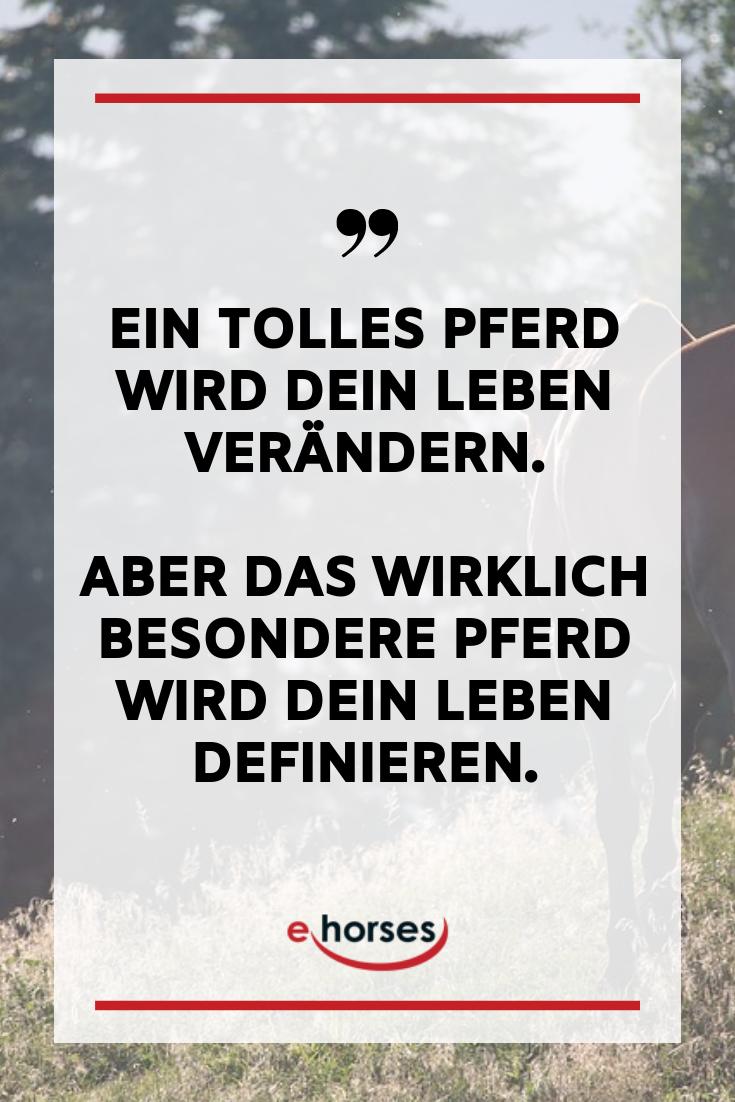 Pferdespruch, Pferde Sprüche, Pferdezitate, Pferde, Pferde ...