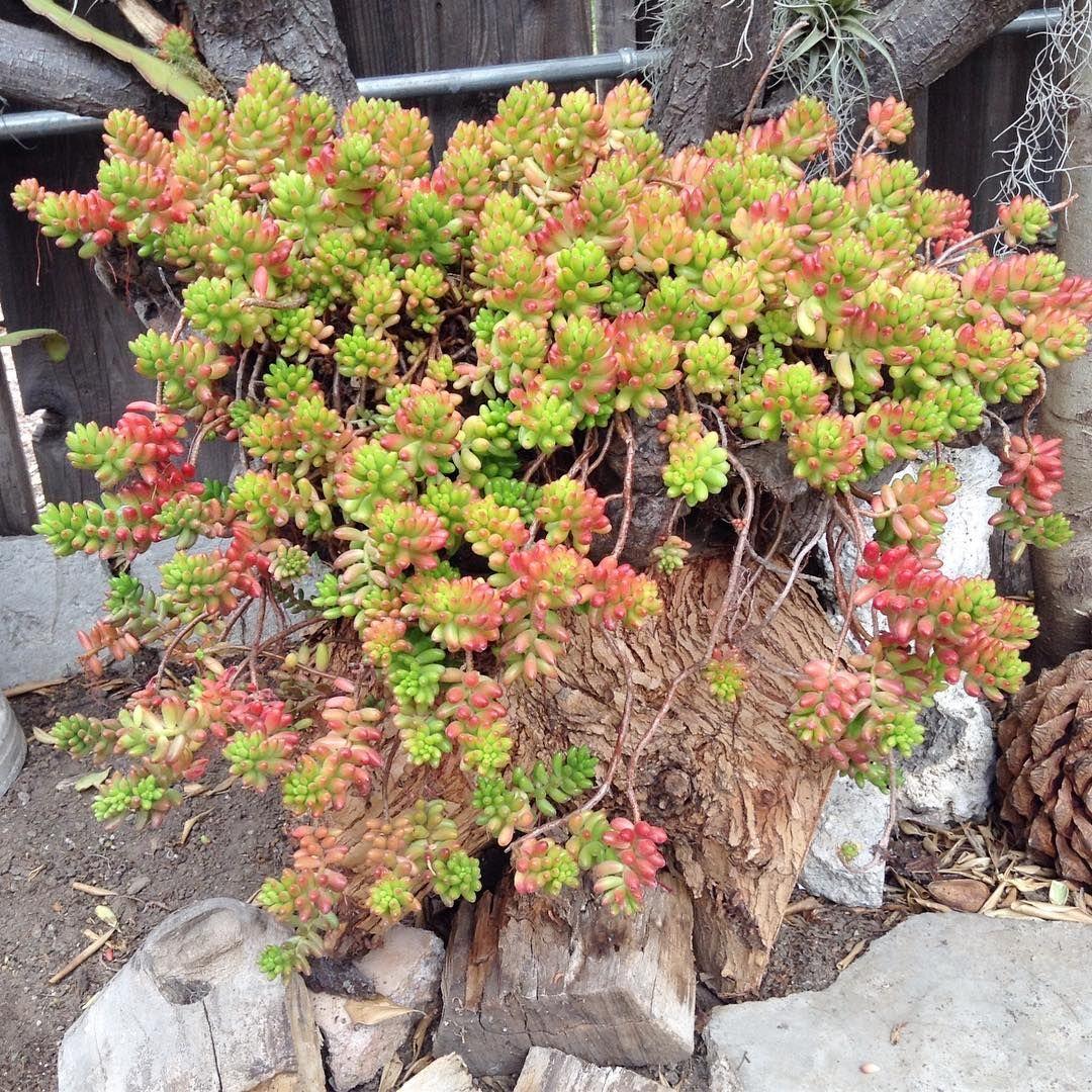 26 Best Succulent Garden Ideas Around The World   Succulents ...